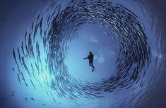 脚光を浴びて:勇敢なphotographrデイビッドDoubiletは、パプアニューギニアの澄んだ水で瞬間を捉えられるバラクーダは、向こう見ずなダイバーダイナハルステッドを取り囲む