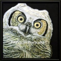 Tigris - Artwork by Mary Monson. Owl Artwork, Owls, Mary, Painting, Pisces, Animals, Painting Art, Owl, Paintings