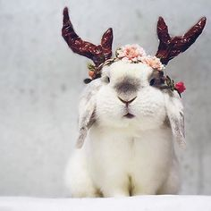 cute, bunny, and rabbit image Cute Baby Bunnies, Funny Bunnies, Cute Baby Animals, Animals And Pets, Funny Animals, Funny Pets, Big Bunny, Fluffy Bunny, Amazing Animals