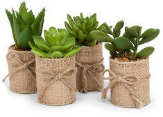 Super cute succulents in Burlap Wrap $10 (Set of 4)