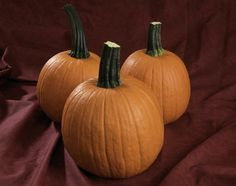 Fall Splendor F1 pumpkin is the perfect size for school children!