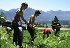 Regione Lombardia - Agricoltura di montagna: biodiversità modello per tornare a sviluppo