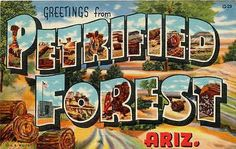 Arizona AZ Large Letter Greetings From Petrified Forest Antique Vintage Postcard