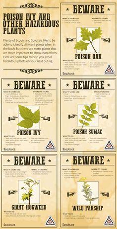 Poison Ivy and Other Hazardous Plants Survival Life Hacks, Survival Tips, Survival Skills, Organic Gardening, Gardening Tips, Safety Tips, Poisonous Plants, Tree Care, Nature Plants