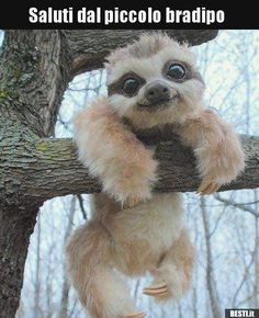 Here is a picture of a baby sloth. You can also find a VIDEO of a REAL sloth on the IG of who is an amazing VO artist that I met this weekend at Im totally watching this sloth video AGAIN after I post this. Baby Animals Pictures, Cute Animal Pictures, Animals And Pets, Smiling Animals, Animal Pics, Lazy Animals, Funny Pictures, Fluffy Animals, Animals And Their Babies