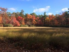 Stretched across more than 3,400 acres in the Lehigh River Watershed, Bear Creek Preserve currently boasts 31 miles of unpaved trails through unspoiled forests and valleys.