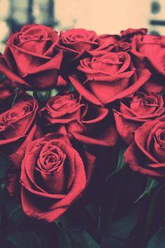 background red rose - Pesquisa Google