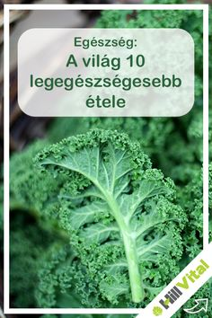 Home Remedies, Cabbage, Health Fitness, Vegetables, Food, Veggies, Vegetable Recipes, Meals, Cabbages