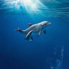 #Delfini, facili da avvistare nelle #Baiedellevante tra #Cinqueterre e #Portofino. www.cleliaapartments.com