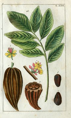 Wilhelm Natural History Botanical Prints 1810 Chocolate