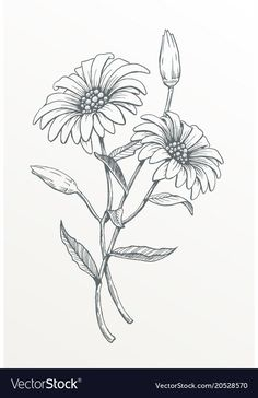 for family tattoo : One Daisy Flower Line Drawings, Flower Sketches, Pencil Art Drawings, Daisy Drawing, Floral Drawing, Cute Flower Drawing, Wildflower Drawing, Drawing Flowers, Tattoo Sketches