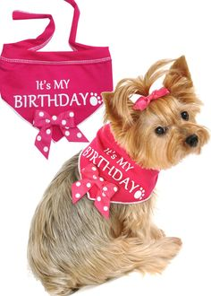It's My Birthday (Girl) Bandana Scarf in color Pink/White