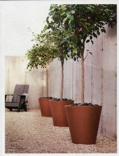 side of the house, potted trees & gravel - easy!  *idea* this would be cute in the back yard, one pot w/ f, one with a heart & one with c