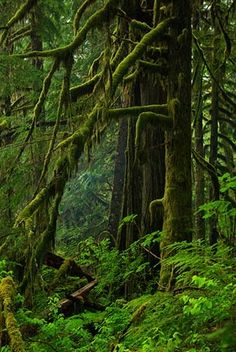 Deep forest, Baker River Valley ~ Photo by Stephen Cole.