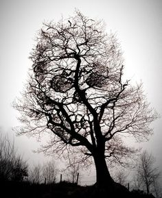 skull illusion - crâne dans les arbres