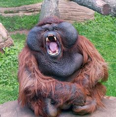But the dozy 58-year-old, called Kiparis, was merely yawning after a morning spent lazing around at Moscow Zoo, Russia
