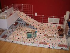We are building this cage for our new family members...with some adjustments, of course!  ;)