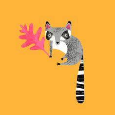 Raccoon by Natasha Durley