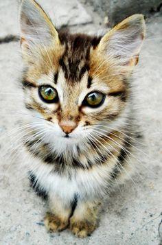 Such a pretty cat