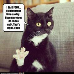 I SAID FOUR!