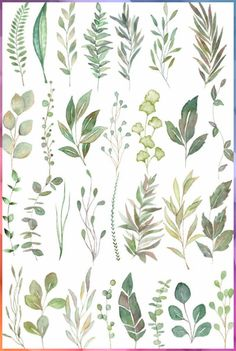 Watercolor Plants, Watercolor Leaves, Green Watercolor, Watercolor Paintings, Watercolor Wedding, Watercolor Basic, Leaf Drawing, Plant Drawing, Botanical Art