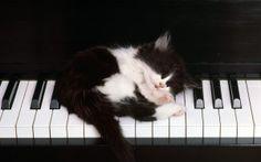 Preview wallpaper kitten, piano, sleep