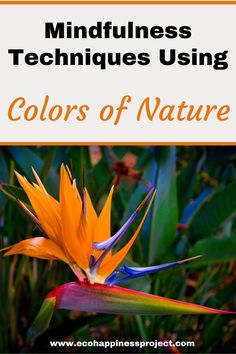 Mindfulness Techniques Using the Colors of Nature Natural Parenting, Parenting Advice, Parenting Quotes, Mindfulness Techniques, Green Living Tips, Living At Home, Natural Living, Child Development, Mom Blogs