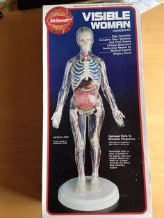 "Visible Woman 1994 Skilcraft Skeleton Anatomy Kit 14"" Instructions Paint Brushes"