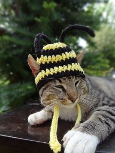Cat Hat Costume Small Dogs- The BumbleCats Bee Hat - Cats Clothing Apparel Clothes Accessories