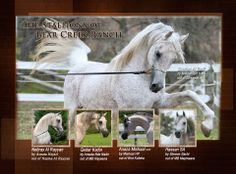 Check out the Amazing Stallions of Bear Creek Ranch.  Which one is YOUR favorite???