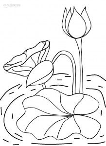 lily pad coloring pages printable