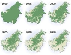 Palm Oil Investigations.. this is what Borneo could look like in six years.