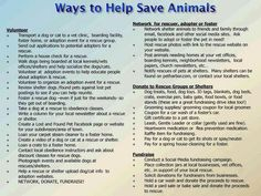 Ways to help save animals - how to put your time to good use
