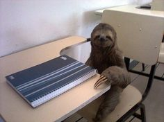 I got The Studious Sloth.! What Kind Of Sloth Are You?