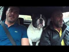 This French Bull Dog Makes Quite The Duet - Gwyl.io | Read more http://gwyl.io/this-french-bull-dog-makes-quite-the-duet/