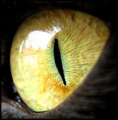 The Cat of Quiet Eyes