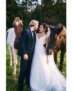 Horses at Sanctuary Estate