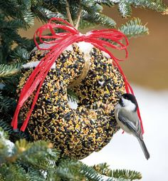 I make these bird seed wreaths every year.  Birds love them!  I add fresh cranberries. May need to make a few!