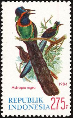 Arfak Astrapia stamps - mainly images - gallery format