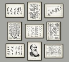 These evolution prints so they can decorate their walls some more. | 33 Gifts For The Loveable Science Geek In Your Life
