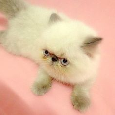 I HATE cats. But this one is the cutest thing I have ever seen!