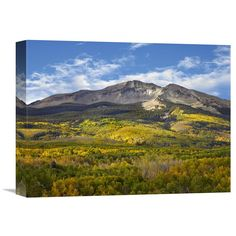 Global Gallery Aspen Forest and East Beckwith Mountain West Elk Wilderness Colorado Wall Art - GCS-396799-1216-142