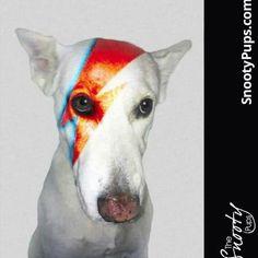 David Bowie custom dog portrait. #davidbowie #petart #thesnootypupd