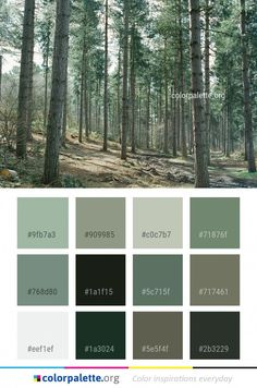 Make Use of Colour In Your Kitchen With These Ideas Green Pallete, Green Colour Palette, Forest Green Color, Forest Nursery, Nursery Paintings, Room Color Schemes, Living Room Green, Collor, House Colors