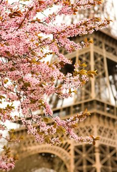 Spring in Paris / Eiffel Tower / Cherry blossoms