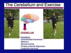 Cerebellum and Exercise The Cerebellum is the best treasure of the brain: Neuroscience and Physical Exercise