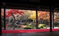 圓光寺 京都 紅葉 Kyoto, Aquarium, Minimalist, Japan, Interior Design, Goldfish Bowl, Nest Design, Home Interior Design, Aquarium Fish Tank