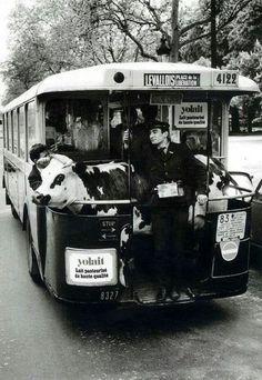 Robert Doisneau, 1962