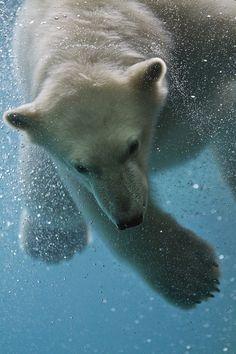 Super mooi!!! ijsbeer jonge!!!