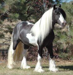 Que lindo caballo